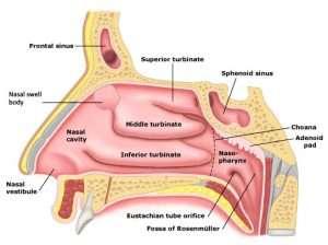 Nasal Swell Body RadioFrequency Treatment Philadelphia